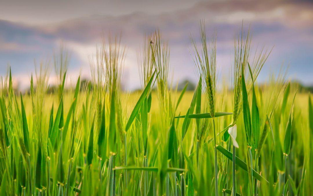 Polaris, premiado por su contribución a la transformación digital agroalimentaria
