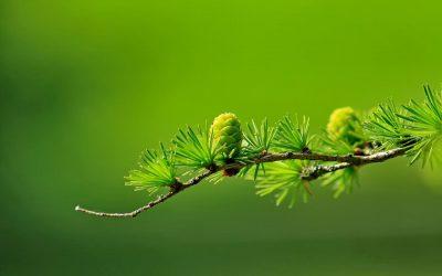 La empresa paperless: innovación y productividad para conservar el medio ambiente