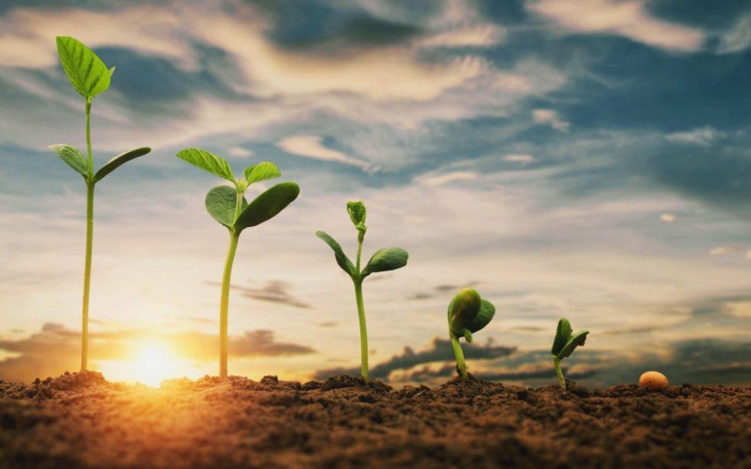 El estado de la digitalización en la industria agroalimentaria