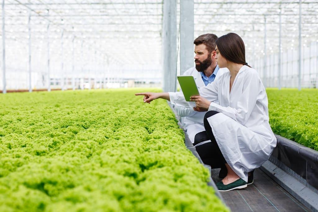 Cómo mejorar la calidad en la industria agroalimentaria